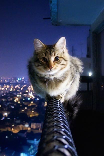 CITY CAT ❤