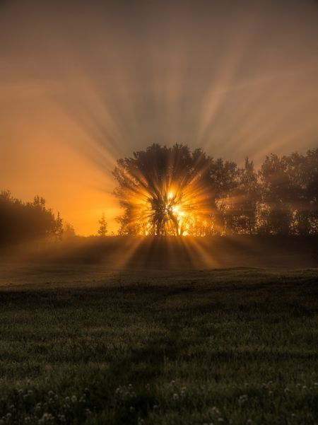 Tree of life Photo by Anders Hanssen -- National Geographic Your Shot