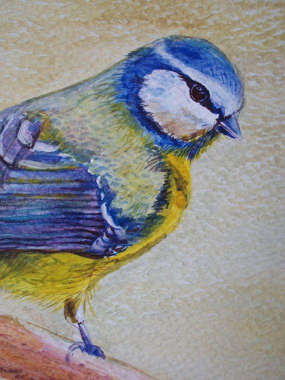 Uccello Cinciallegra acquerello uccelli della di Stellangelo