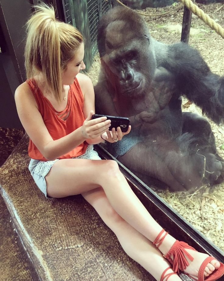 "1,120 Likes, 133 Comments - Lindsey Costello (@lindseyncostello) on Instagram: ""My new friend and I enjoy watching videos of baby gorillas!  #mylifeiscomplete…"""