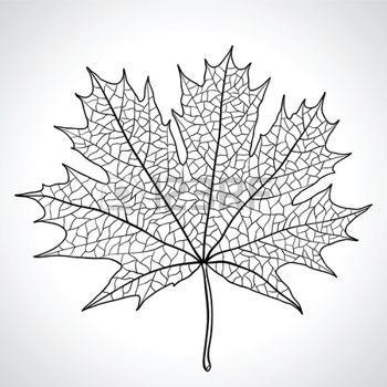 dibujos de hojas de otoño: Hoja de arce, símbolo de la naturaleza, monocromo Vectores