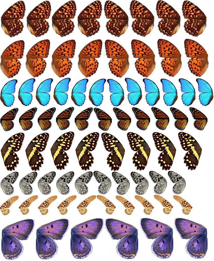 Detailed butterfly wings , printable for collage, altered art.