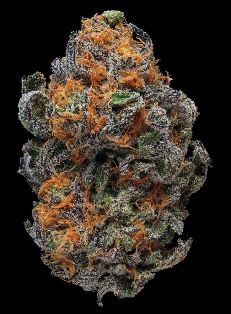 426 best images about natures nugs on pinterest portal