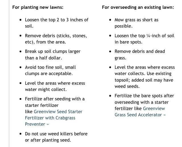 prayer plant care instructions