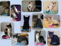 Katzenwelpen -  Haltung: Wohnung/ Freigang Rasse: Kurzhaarkatzen Tierärztliche Versorgung: geimpft, gechipt, entwurmt Alter: geb.