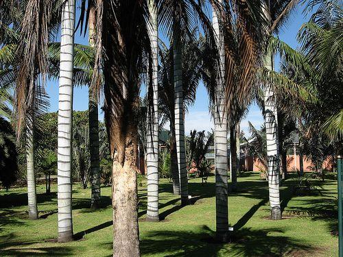 """Jardin Botanico Bogota  """"Posee una fauna asociada con los planos de agua propios y los del Parque Simón Bolívar aledaño, que son frecuentados por aves migratorias como la « mirla buchipecosa » (Turdidae), el « atrapamoscas occidental » (Empidonax difficilis) y el « cardenal abejero » (Piranga rubra).!"""