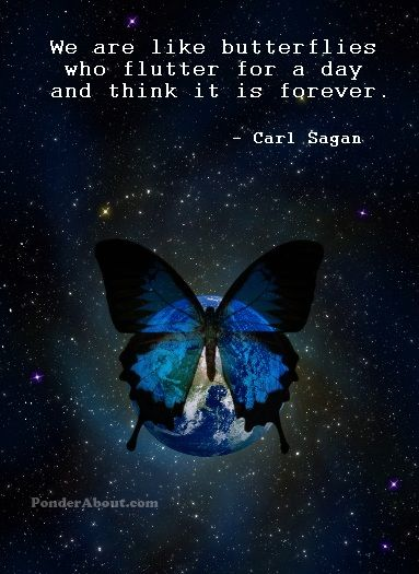 """""""We are like butterflies who flutter for a day and think it is forever."""" ~Carl Sagan ..*"""