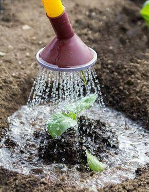 Garten im Urlaub: bewässern
