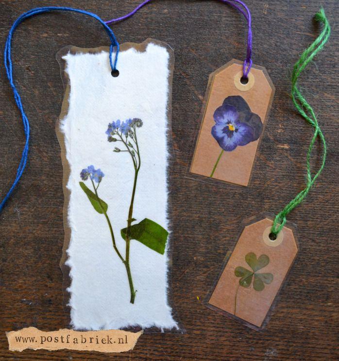 DIY dried flower ideas