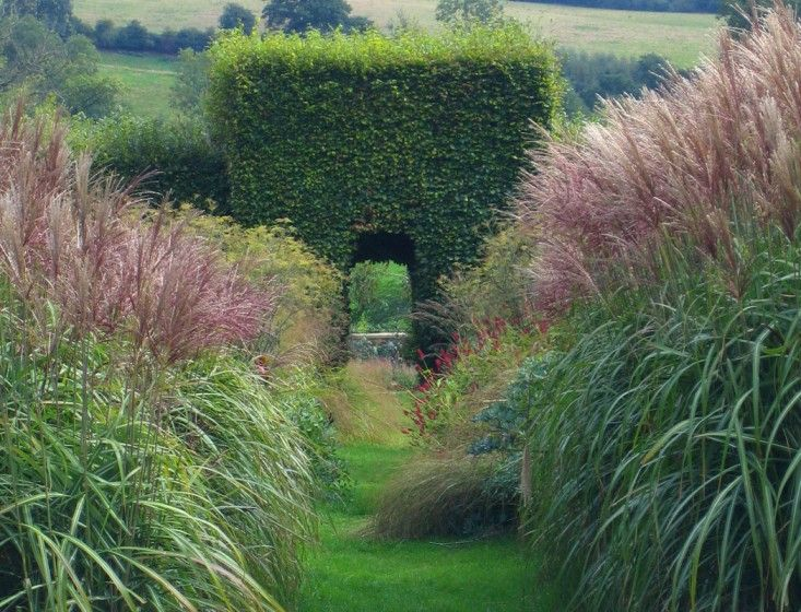 1000 images about ornamental grasses on pinterest for Wild grass gardens