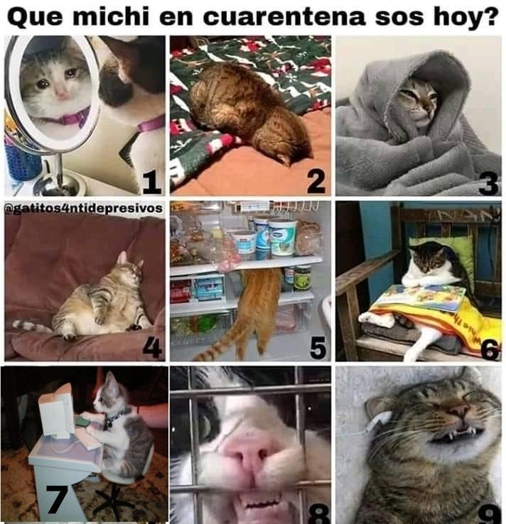 Memes Karen Gatos Funny Animal Memes Animal Memes Cat Memes