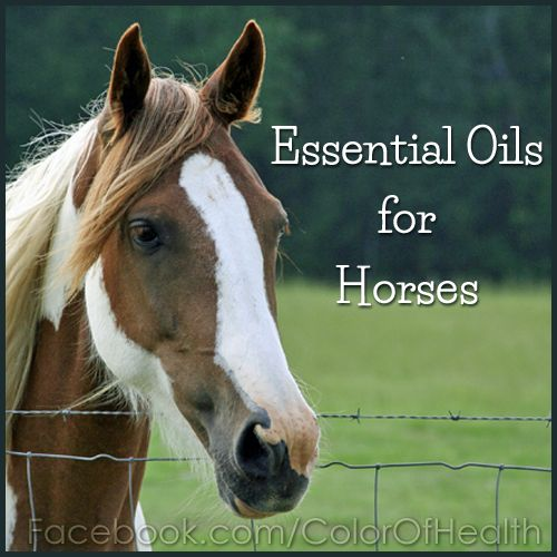 doterra and animals | Pay close attention to how the horse reacts to the essential oils ...