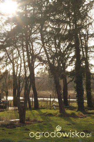 Ogród Magnolii (Ogród tworzę nowoczesny czyli wewnętrzna walka jak nie zostać kokoszką :) - strona 2132, Forum ogrodnicze - Ogrodowisko)