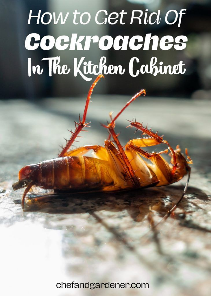 How To Get Rid Of Cockroaches In My Kitchen