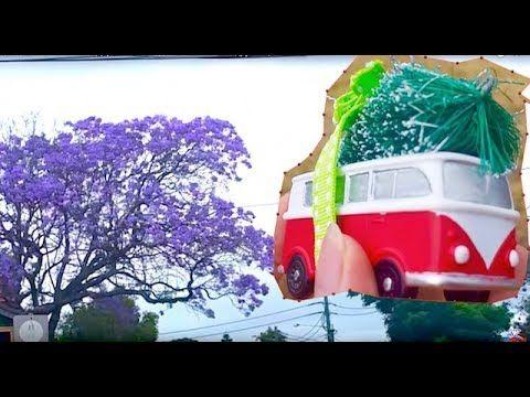 Цветущие Фиолетовые Деревья в Австралии Jacaranda и другие цветы