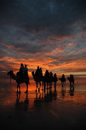 Sunset - Camels on Cable Beach, Western Australia. Used to watch these every day after work at Coles Supermarket. Absolute paradise!!!