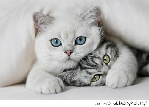 grafika cat and animal