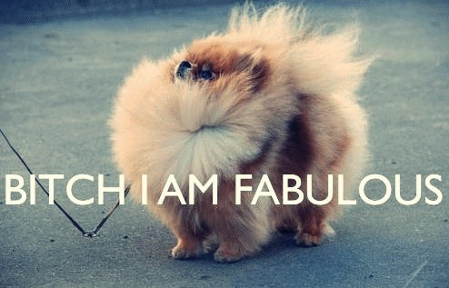 Yes you are: Dogs, Puppies I, Life Mottos, Adorable Puppies, Pomeranians Humor, Pom Pom, Hair, Animal, I'M Fabulous
