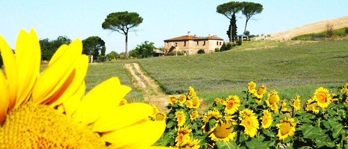 Adeguata su una collina delle creti senesi nel comune di Buonconvento, antico borgo medievale Toscano in provincia di Siena. www.casavacanzefornace.it