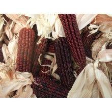Bloody Butcher Corn Vegetable Seeds