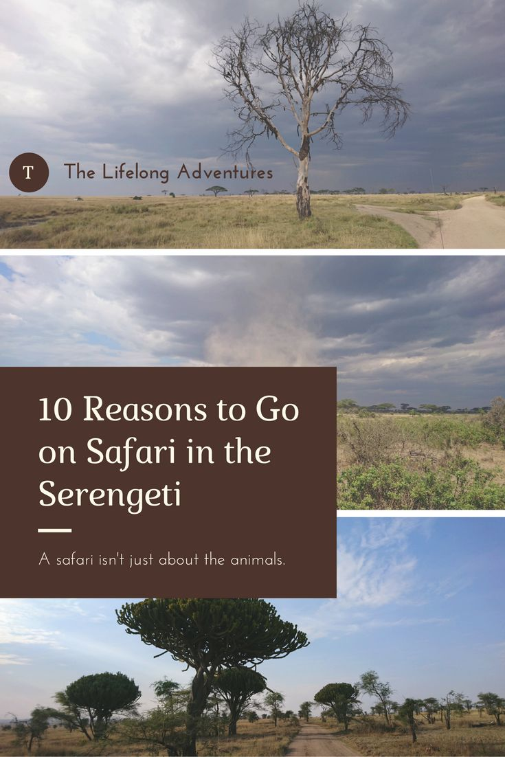 Throughout my time in the Serengeti I was constantly astounded by its beauty. Read more...