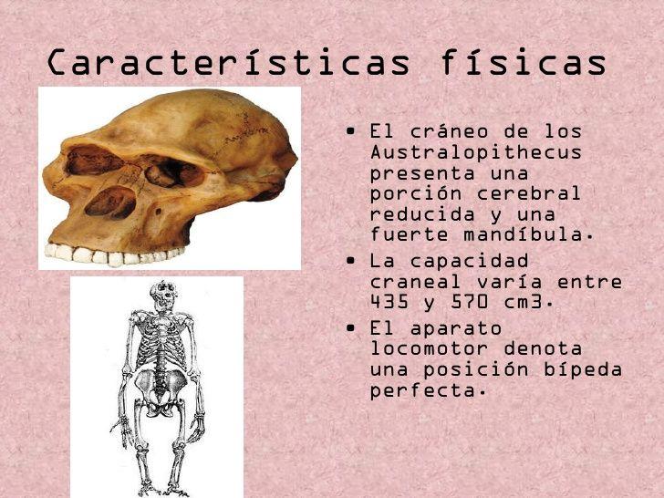 Australopithecus garhi (especie de Australopithecus) Tiene especiales características craneales y, sobre todo, faciales. Capacidad craneal de unos 450 cm³ y discutidos indicios de proto-industria lítica. Situado hace 2,5 m.a.