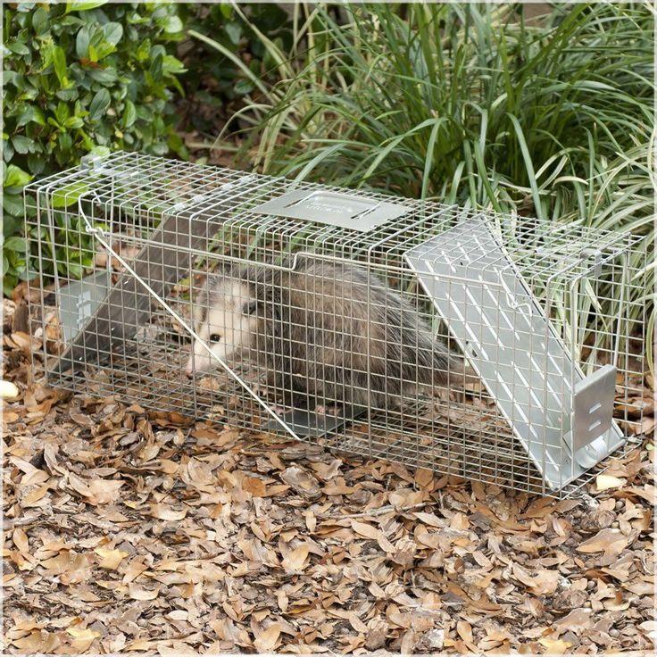 Live Trap 2Door Cage Raccoon Groundhog Stray
