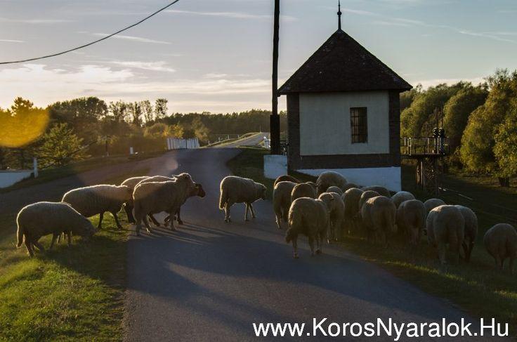 Szállások Szarvason és környékén - www.korosnyaralok.hu