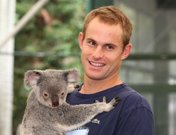 """ЛИДЕРЫ """"БОЛЬШОЙ ДВАДЦАТКИ"""" В БРИСБЕНЕ БУДУТ ОБНИМАТЬСЯ С КОАЛАМИ.  Местный парк-заповедник """"Lone Pine Koala"""" уже посоветовал президентам во время встречи с коалами притвориться деревом. По ее словам сотрудников парка, коалы в обычной жизни привыкли видеть перед собой именно стволы деревьев.  Лоун Пайн Коала — один из очень немногих природных парков в мире, где посетителям, хоть и за определенную плату, фактически разрешают держать коал на руках. На фото — теннисист Энди Роддик с коалой."""