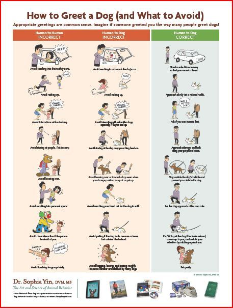 Free Downloads: Posters, Handouts, and More! | Animal Behavior and Medicine Blog | Dr. Sophia Yin, DVM, MS