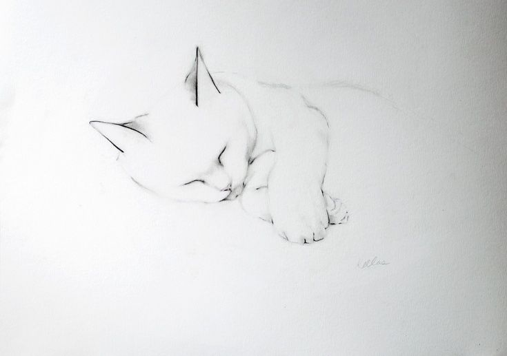 ARTFINDER: Feline Peace by Kellas Campbell - Charlie is my cat and the subject of most of my drawings.  All cats are cute, of course, but Charlie seems to specialize in it.   Now that it's getting colde...