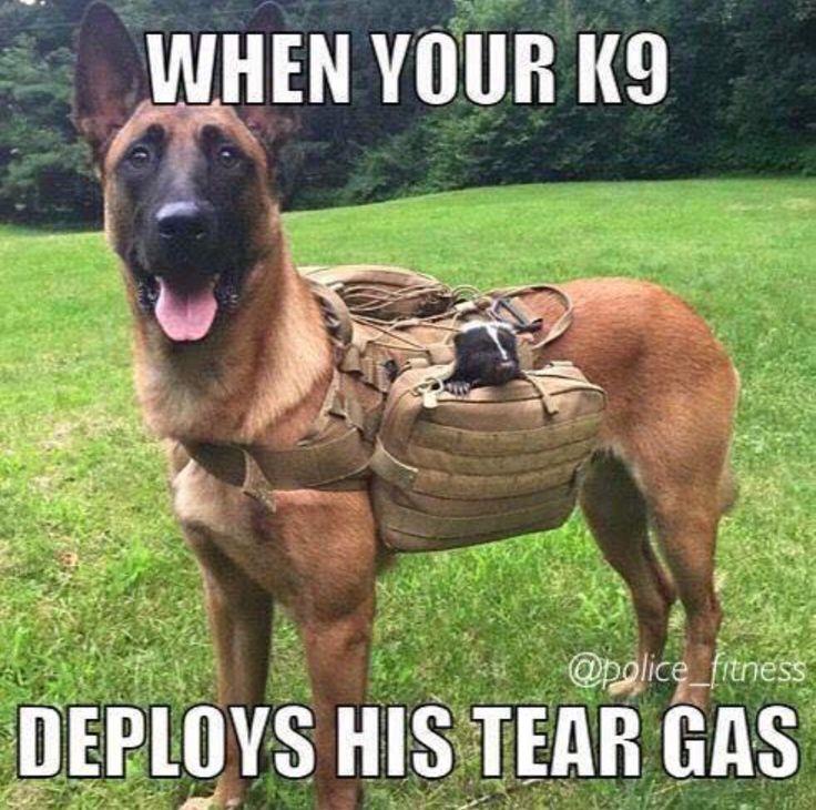 4da62f396900808fe33487942441c9ab military police military dogs 64 best malinois humor images on pinterest german shepherd