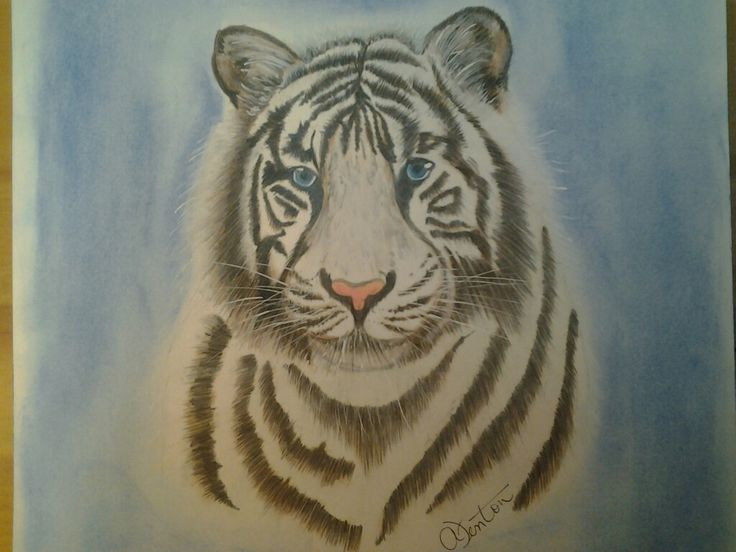 White Tiger ... not my favorite drawing.... prisma pencils and pastels