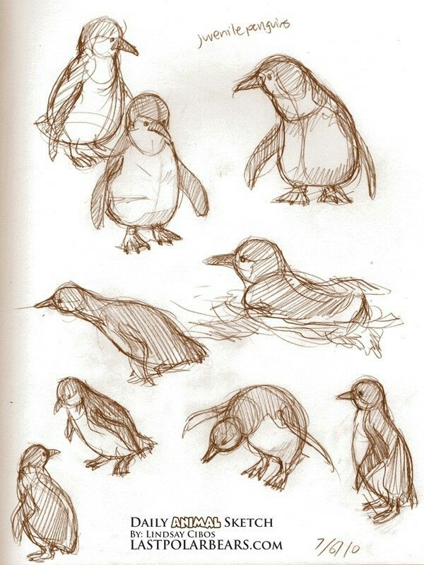 Penguins sketches