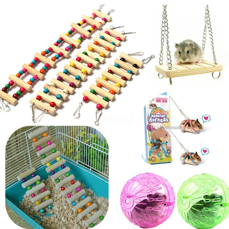 Swing Wooden Mouse Rat Bird Parrot Hamster Ladder Crawling Bridge Toy Shelf Cage | Pet Supplies, Small Animal Supplies, Exercise & Toys | eBay!