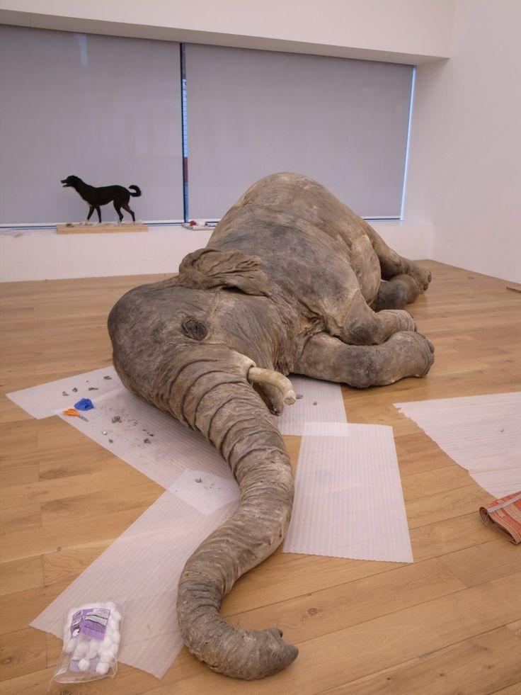 huang-yong-ping-dead-elephant.jpg (1000×1333)