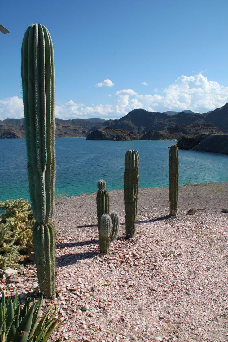 Baja California - Mexico