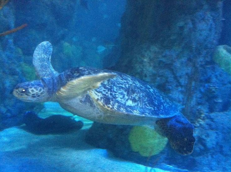 19 Best Images About Downtown Aquarium Denver Colorado