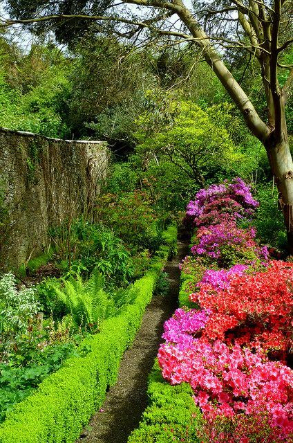 Azaleas at Hartland Abbey Gardens, Devon