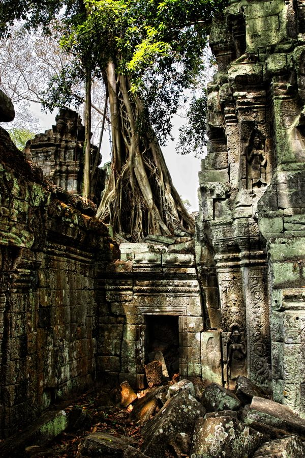 Angkor Wat, Cambodia abandoned ancient temple reclaimed by the forest. mystical