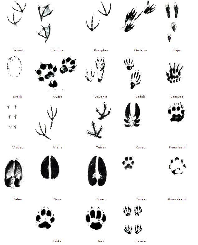 Stopy některých druhů zvěře