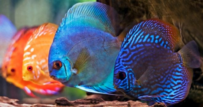 Freshwater Aquarium Fish Colorful Saltwater And Fresh