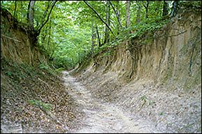 The Trail of Tears cuts deep into the Crowley's Ridge soil at Village Creek State Park in Arkansas.