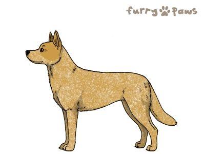 Furry Paws // UCFl Kip's Ryukin [23HH 1.620] 14.1 *BoB*'s Kennel