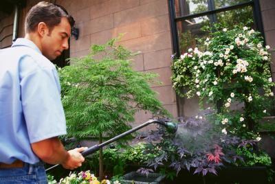 Curas para a ferrugem em folhas de plantas | eHow Brasil