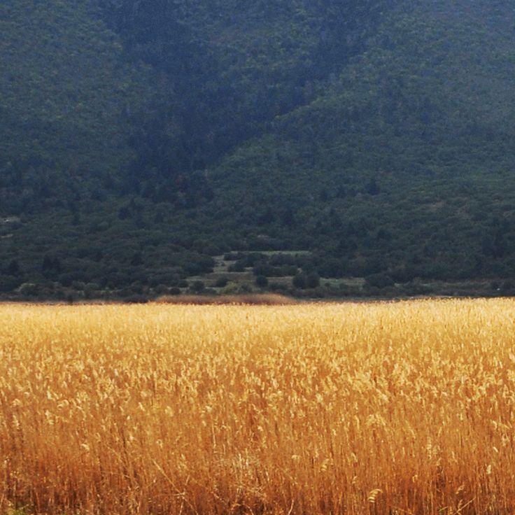 golden fields, character design gif, fox,rabbit,bear