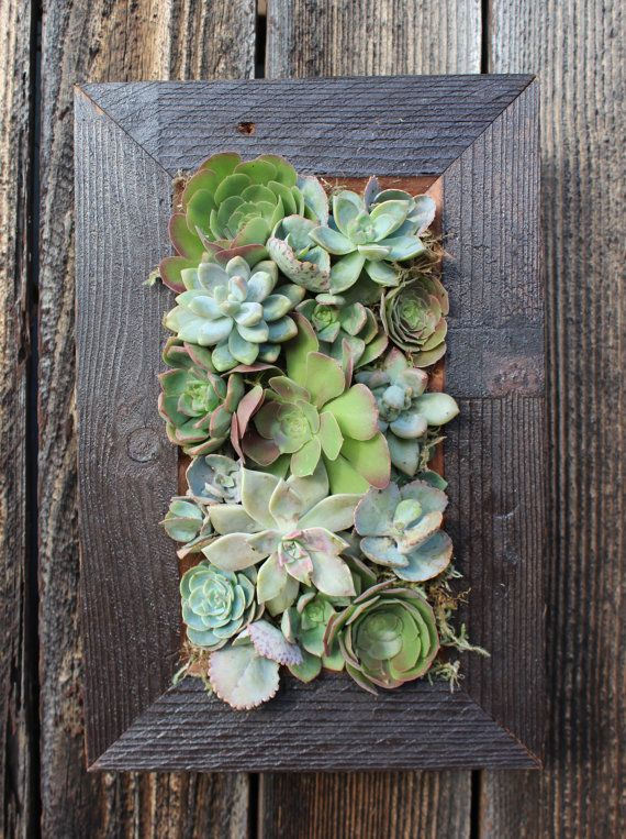 Reclaimed wood hanging succulent planter a.k.a. living wall. www.OnewithPlants.com. I'd like to figure out how to make this.