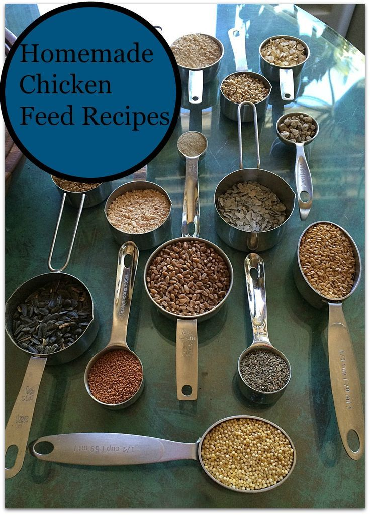 12 Homemade Chicken Feed Recipes Give Your Chickens An Organic Food