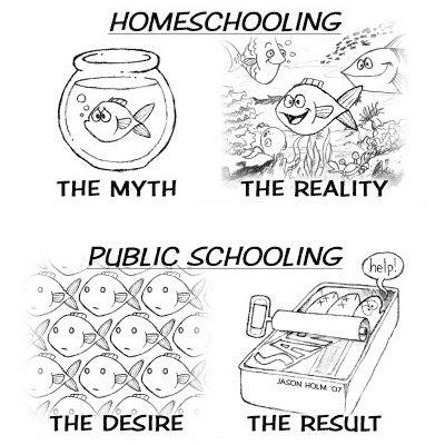 De verschillende onderwijsopties in Nederland.