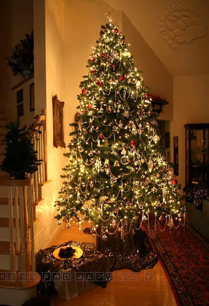 """Ormai è quasi Natale in Italia e spero di riuscire a postare questa poesia augurale di Gianni Rodari letta dal bravissimo Gianni Caputo. BUON NATALE!!! """"S'io fossi il mago di Natale farei spuntare un albero di Natale in ogni casa, in ogni appartamento dalle piastrelle del pavimento, ma non l'alberello finto, di plastica, dipinto che vendono adesso all'Upim: un vero abete, un pino di montagna,[...] #giannirodari, #giannicaputo, #poesiaitaliana, #italiano, #poesiarecitata, #natale,"""